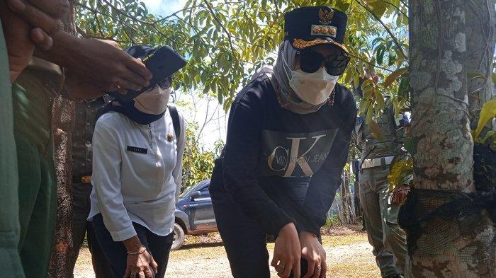 Bupati Rezita Meylani Melihat Keindahan Anggrek di TNBT