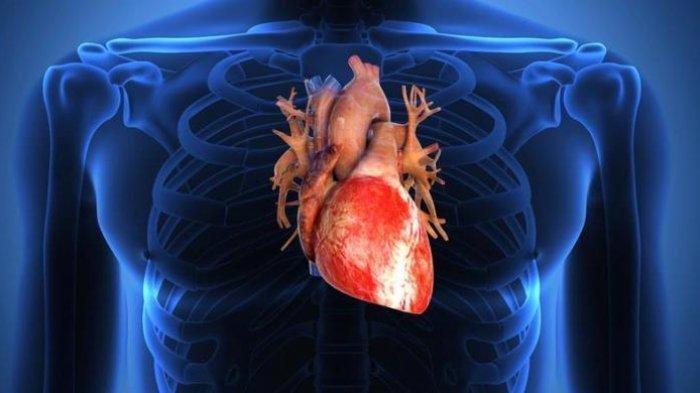 Catat, Daftar Kebiasaan Buruk yang Merusak Jantung