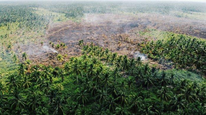 Karhutla Kembali Terjadi di Inhil Riau, Pelaku Pembakar Ditangkap
