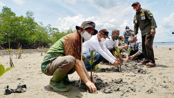 Melihat Ekosistem Mangrove di Riau