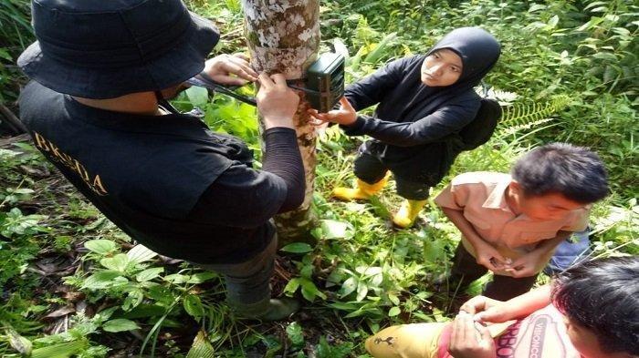 Ada Makhluk Aneh Misterius di Agam Sumatra Barat, BKSDA Pasang 3 Kamera Trap