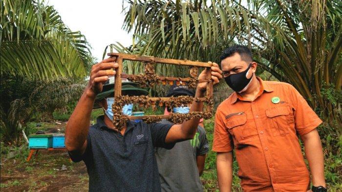 Produktif Saat Pandemi, Warga Teluk Rimba Bangkit Budidaya Lebah Melifera