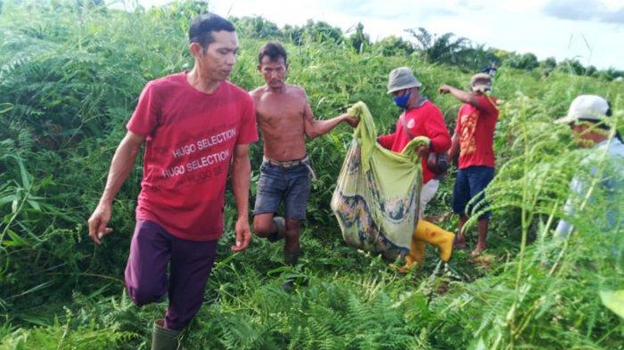 Warga Kota Dumai Riau Tewas Diterkam Harimau Sumatra