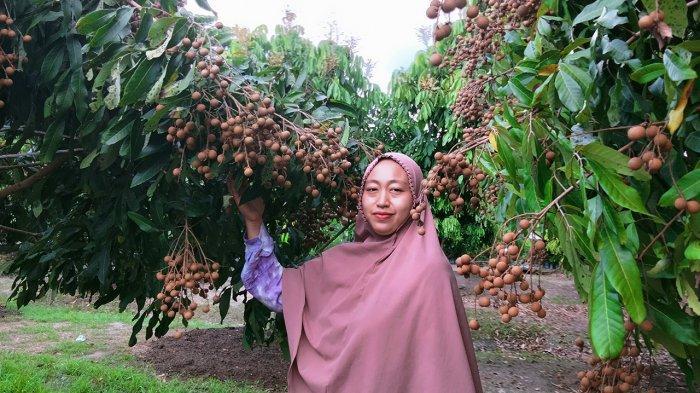 Sulis, Petani di Pekanbaru yang Sukses Kembangkan Kebun Lengkeng
