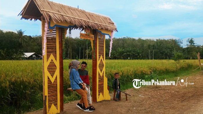Viral, Nikmati Keindahan Sawah di Agrowisata Desa Mentayan Bengkalis Riau