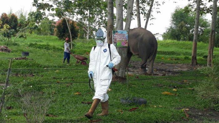 Cegah Penyebaran Covid-19, Kebun Binatan Kasang Kulim Disemprot Disinfektan