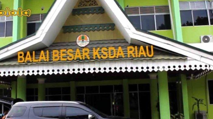 Balai Besar Konservasi Sumber Daya Alam Provinsi Riau