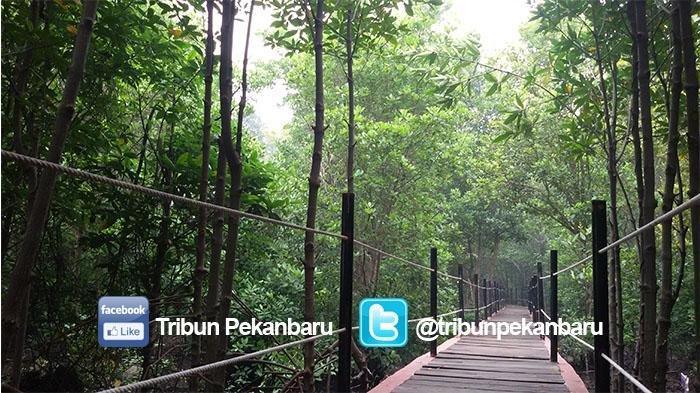 Menyusuri Hutan Mangrove di Tengah Kota, Bandar Bakau Dumai