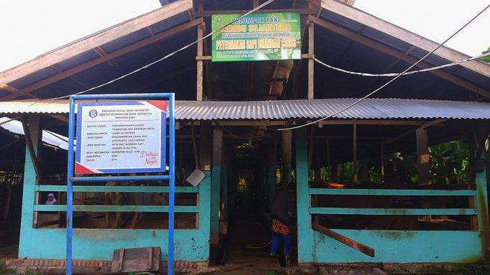 Kisah Rojali, Penjual Kotoran Sapi di Siak Riau Kantongi 6 Juta Perbulan