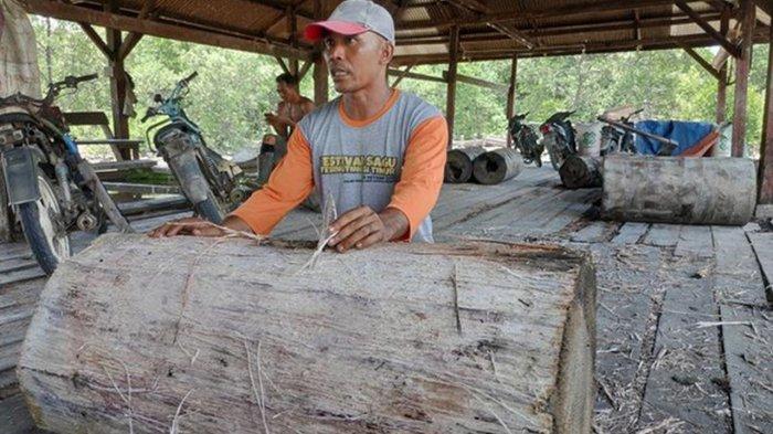 Ekspor Komoditi Tumbuhan di Kepulauan Meranti Meningkat, Berikut ini Datanya