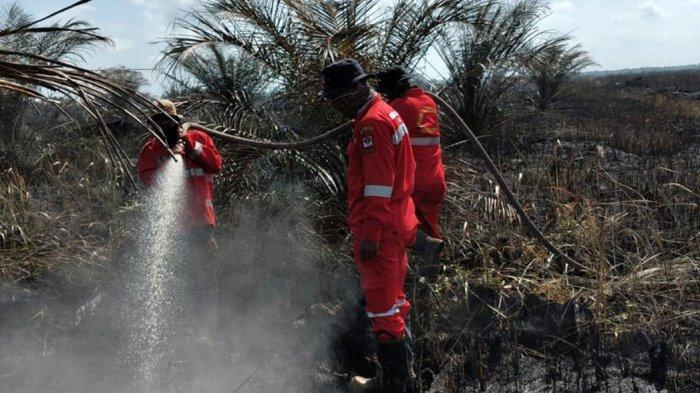 Daftar 7 Daerah di Riau yang Tetapkan Siaga Darurat Karhutla 2021