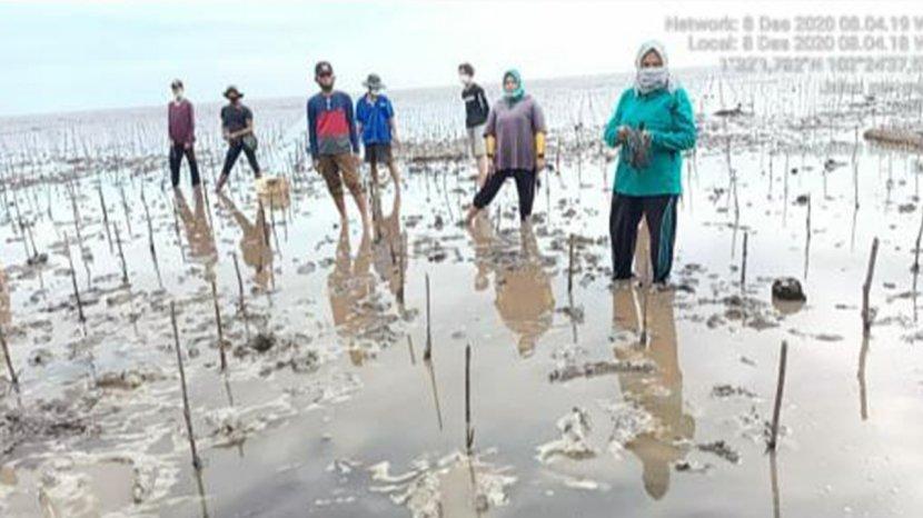 Besok Presiden Jokowi ke Riau, Tanam Mangrove di Desa Muntai Barat Bengkalis