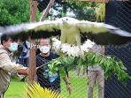 Balai-Besar-KSDA-Riau-Lepas-Liarkan-satwa-dilindungi-2-ekor-elang-di-Tembilahan-Indrahiri-Hilir.jpg