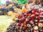 Daftar-Harga-Kelapa-Sawit-di-Riau-Priode-4-10-Agustus-2021.jpg