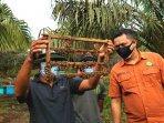 Produktif-Saat-Pandemi-Warga-Teluk-Rimba-Bangkit-Budidaya-Lebah-Melifera.jpg