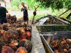 memuat-buah-kelapa-sawit-yang-baru-dipanen-ke-bak-truk.jpg