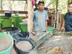 sofian-bersama-rekan-rekanya-memproduksi-pakan-ternak-ikan-lele-sendiri-dari-ampas-kelapa.jpg