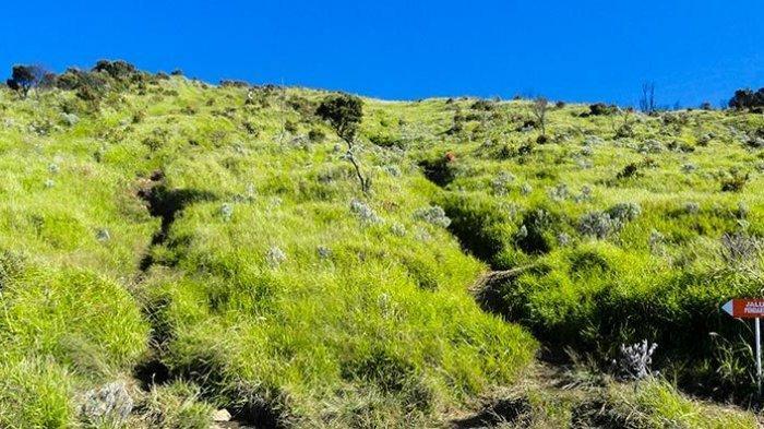 Bunga Edelweiss di Gunung Sindoro.