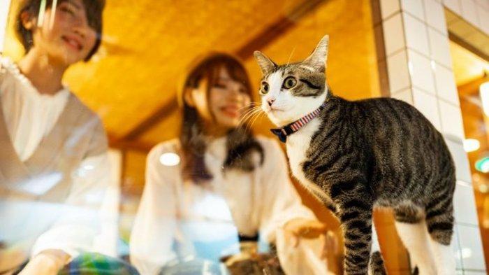 Unik! Di Hostel Neko Hatago Osaka, Kita Bisa Tidur  Ditemani Kucing yang Menggemaskan