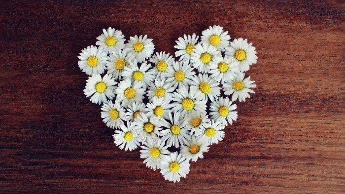 Ingat, Jangan Berikan 7 Jenis Bunga Ini untuk Kado Valentine Pasangan