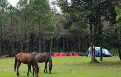 Seru! Bisa Private Camping dan Piknik Tengah Hutan di Jungle Milk Lembang
