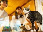 Hostel-kucing03.jpg
