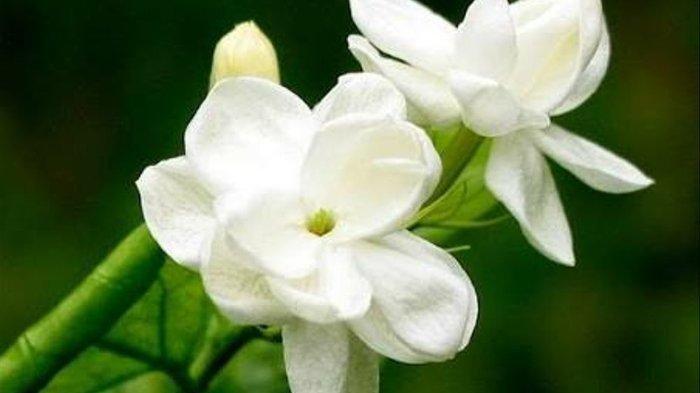 6 Bunga Berkhasiat Sembuhkan Penyakit Tubuh, Ada di Sekitar Kita