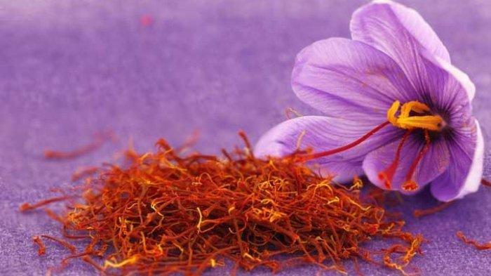 5 Bunga Termahal di Dunia, Harganya Capai Miliaran