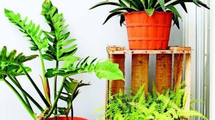 Selain Cantik, Ini 7 Manfaat Mendekorasi Ruangan dengan Tanaman Hias