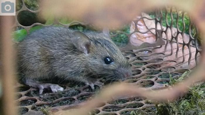 Murah Meriah Tersedia di Rumah, 5 Bumbu Dapur Ini Ampuh Usir Tikus