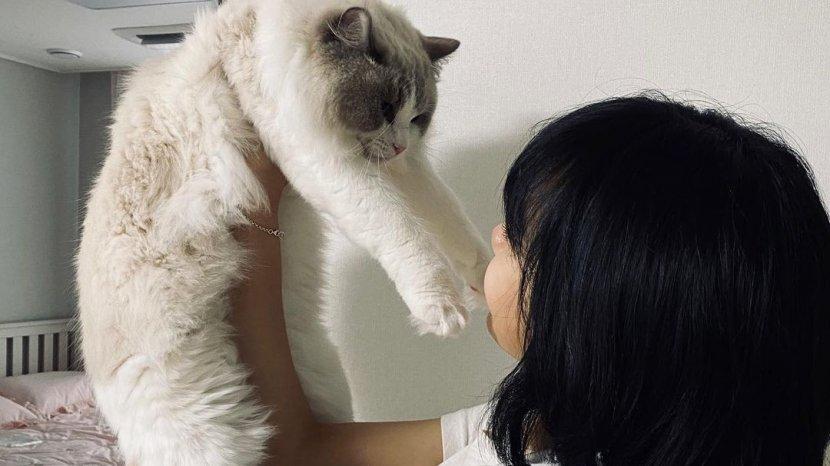 Ini Alasan Mengapa Kucing Suka Memanjat?