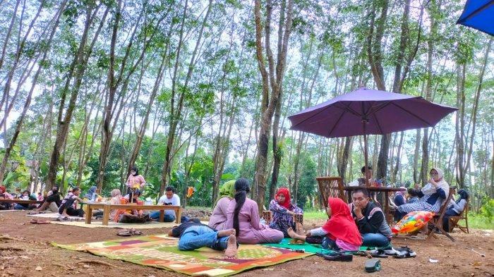 Merasakan Sensasi Makan Bakso di Tengah Alas Pohon Karet Batu Jamus Sragen