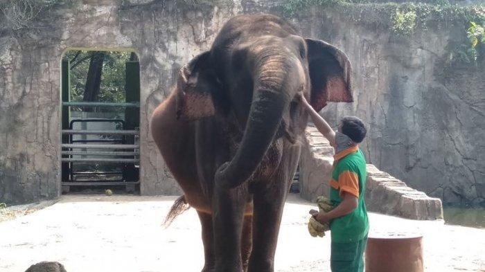 Kasus Covid-19 Melonjak di Jakarta, Taman Margasatwa Ragunan Akan Ditutup Sementara
