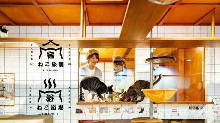 Menggemaskan! di Neko Hatago Jepang, Pengunjung Bisa Puas Bermain dengan Kucing