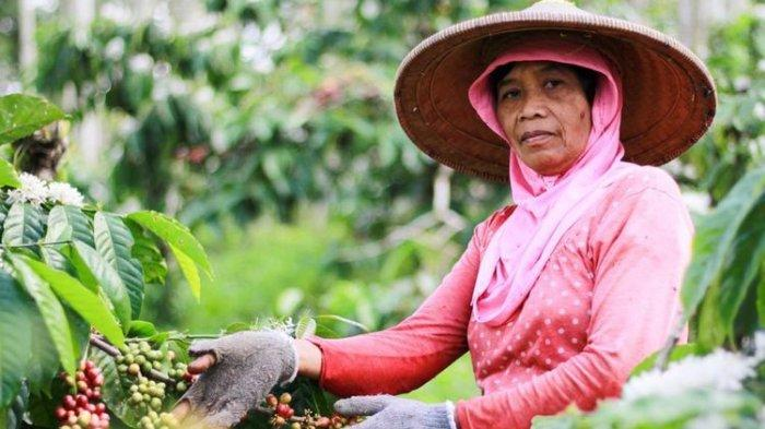Kopi Kawisari, Kopi Tertua dari Jawa Timur yang Sudah Ditanam Sejak Jaman Kolonial