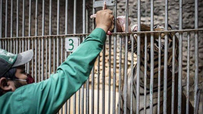Hadapi New Normal, Kebun Binatang Ragunan Akan Kembali Dibuka Mulai 20 Juni 2020