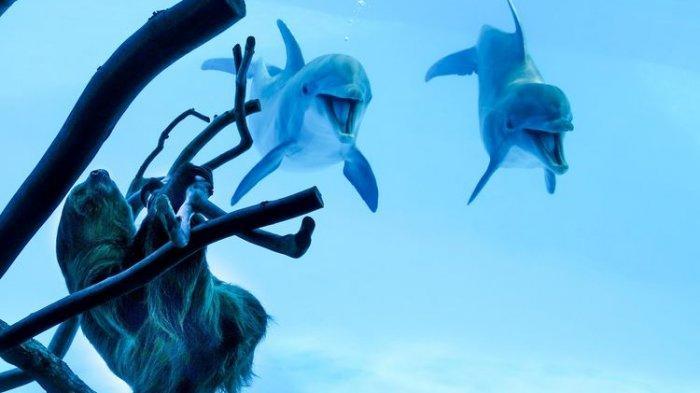 Lucunya Aksi Lumba-lumba ini Saat Bertemu Kukang Untuk Pertama Kalinya