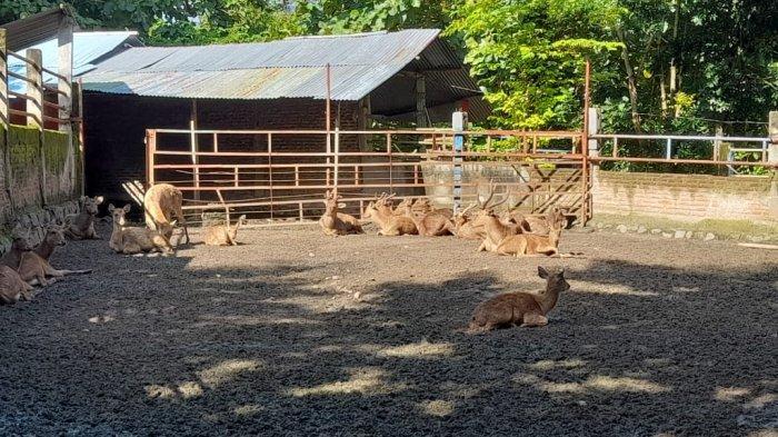 Mengenalkan Berbagai Jenis Satwa kepada Anak Lewat Mini Zoo di Ndayu Park Sragen