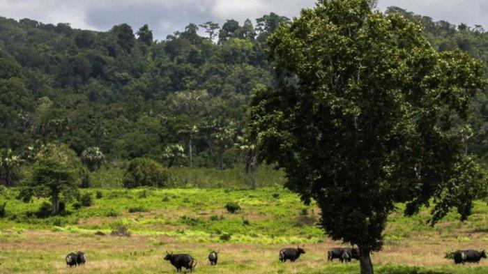 TN Alas Purwo Buka Lagi, Wisatawan Dibatasi 500 Orang Per Hari