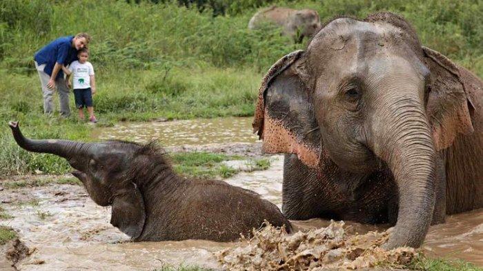 Cegah Anak Bosan Saat Pandemi, Hotel di Thailand Tawarkan Field Trip Virtual Untuk Lihat Gajah
