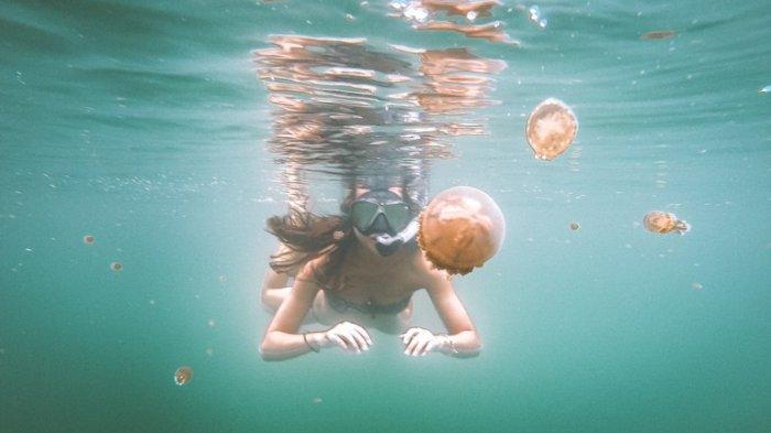 Tak Perlu Panik, Berikut Hal Hal yang Dapat dilakukan Saat Bertemu Ubur-Ubur di Laut