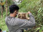 edukasi-seputar-lebah-di-Bojongmurni-Bogor-yess.jpg