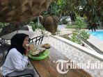kebun-durian-kembang-kuning-madiun-yes.jpg