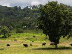 taman-nasional-alas-purwo-di-banyuwangi-jawa-timur-yesss.jpg