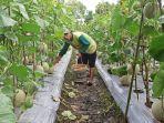 kampung-wisata-edukasi-pertanian-palembang-2.jpg