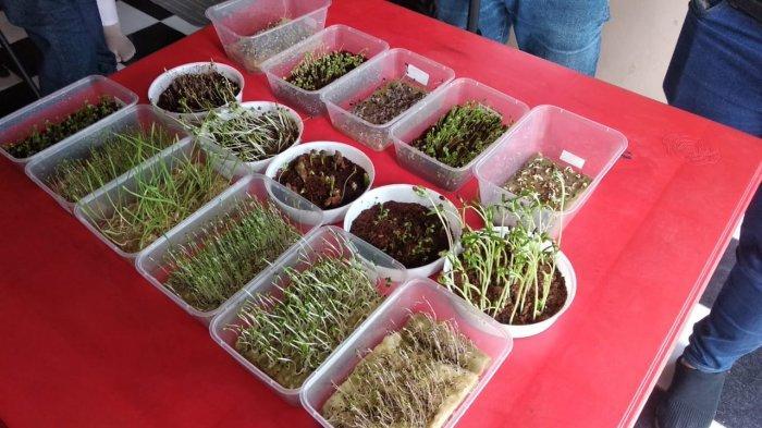 Peluang Bisnis Budidaya Sayuran dengan Teknik Microgreen