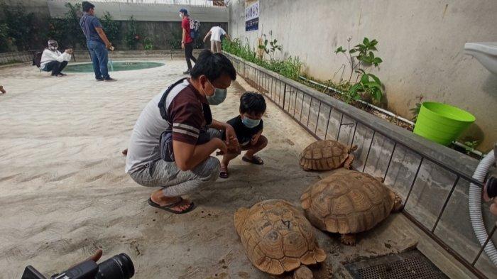 Nyandu Torto, Penangkaran Kura-kura Sulcata di Palembang
