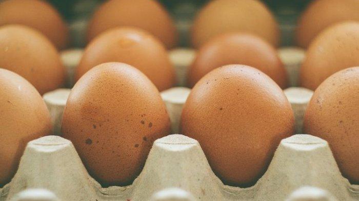 Cara Memanfaatkan Rak Telur untuk Membibit Tanaman