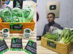 Mengenal Greentop Farm, UMKM Hidroponik & Organik di Makassar yang Jual Berbagai Sayuran Higienis