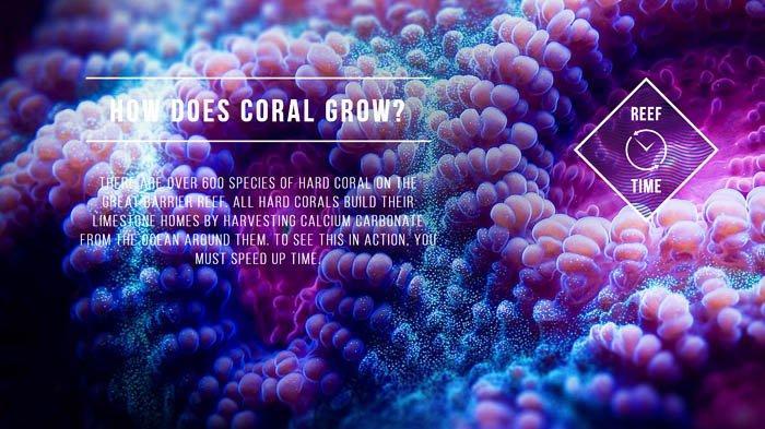 Memanjakan Mata dan Menambah Ilmu Dalam Wisata Virtual ke Great Barrier Reef
